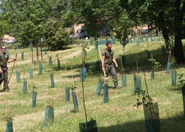 f1_0_50mila-nuovi-alberi-a-milano-impegno-per-il-verde-pubblico