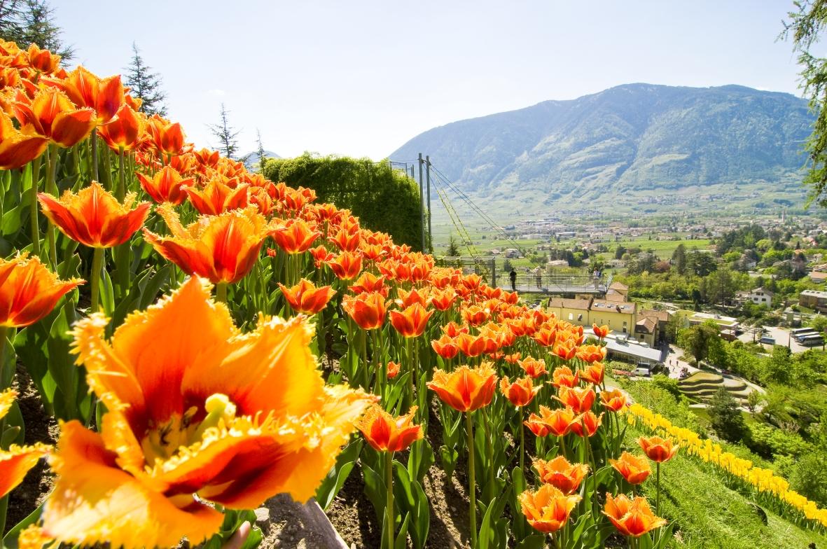 Merano i giardini di sissi aprono i cancelli for I giardini di marzo