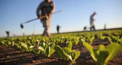 agricoltura-italiana-400x215