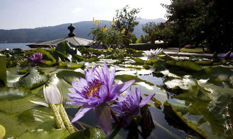 splendidi-fiori-nel-giardino-botanico-dell-isola-madre